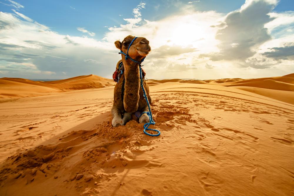 クルーズ旅行 中東・アフリカ
