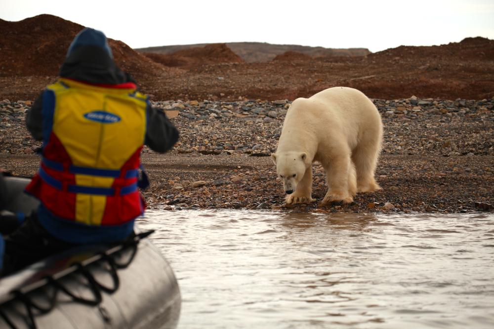 クルーズ旅行 北極